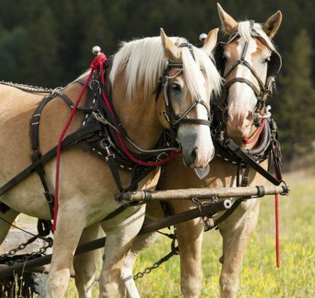 Romantische Kutschfahrt im westlichen München für 2 bis 10 Personen – ab 149,90 Euro bei Groupon