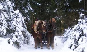 Pferde-Kutschenfahrt Tirol Groupon