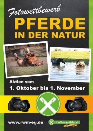 Fotowettbewerb Pferde in der Natur