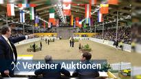 Verdener Reitpferde und Fohlen Auktion