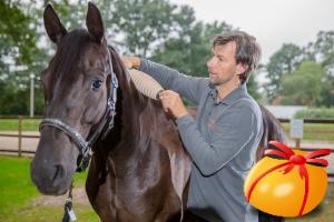 RollArt Faszienrolle am Pferd