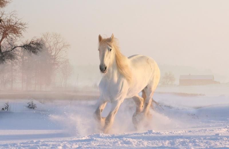 Pferd im Schnee Winter