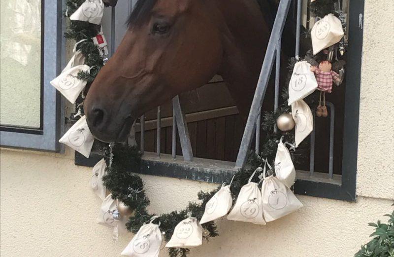 Adventskalender Homes & Horses