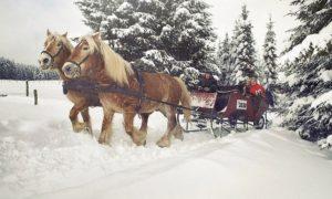 Pferdeschlitten oder Kutschfahrt in Winterberg - Groupon