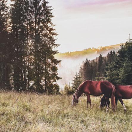 Kostenfreie Ersteinschätzung vom Anwalt für Pferderecht