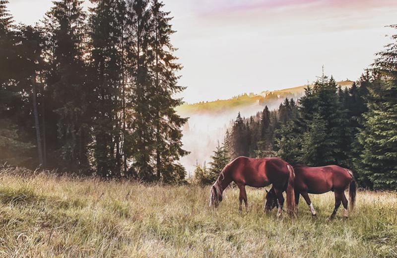 advocado - Kostenfreie Beratung vom Anwalt für Pferderecht