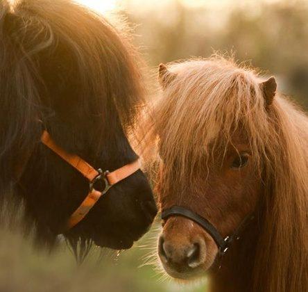 Pony Kuschelstunde auf dem Gnadenhof Wattenscheid – nur 12,90 € bei GROUPON