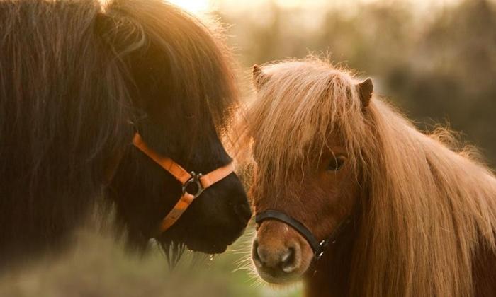 Pony-Erlebnis: Kuschelstunde auf dem Gnadenhof Wattenscheid bei GROUPON