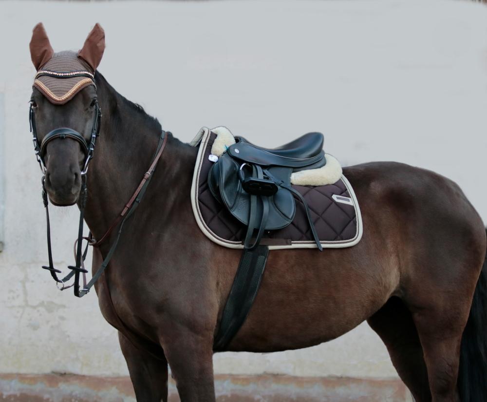 Guardian Horse Unfall Tracker am Pferd von Johanna Steindl