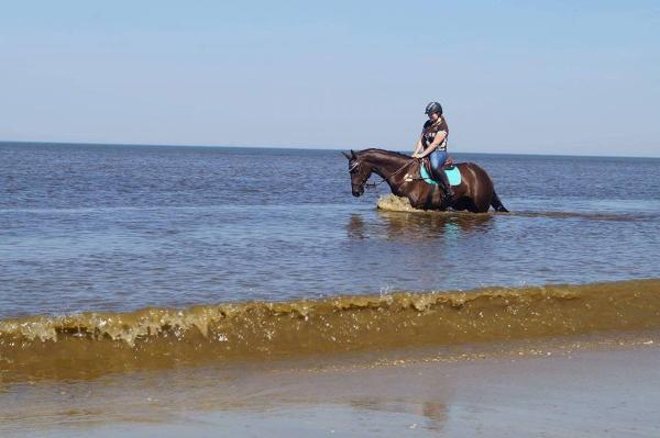 Gina Priss mit Ihrem Pferd im Wasser / am Meer